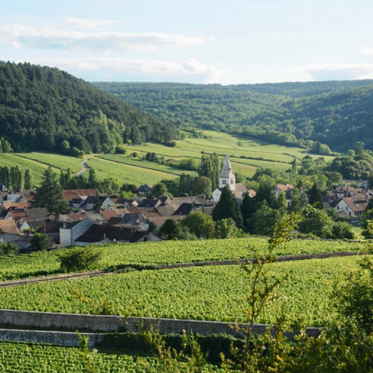 Fietsen door de Bourgondische Wijngaarden